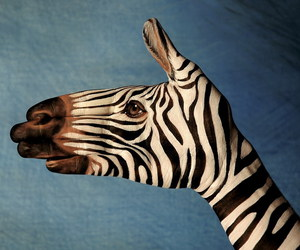 zebra, hand, and animal image