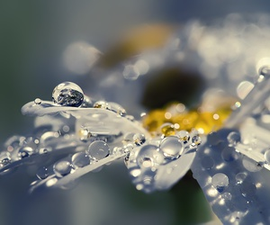 flowers, water, and rain image