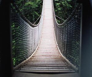 bridge, photography, and nature image