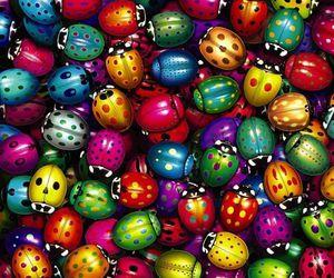 ladybug, colors, and colorful image