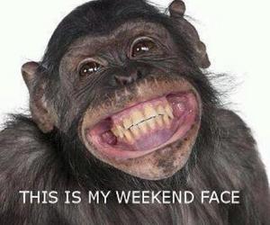 weekend, monkey, and smile image