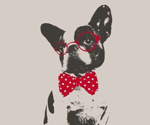 dog, red, and wallpaper image