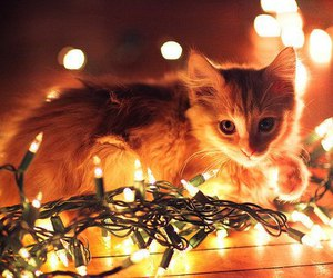 cat, orange, and christmas image