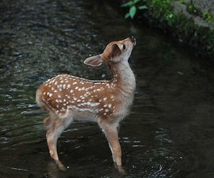 cool, deer, and fawn image