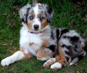 dog, sweet, and puppy image