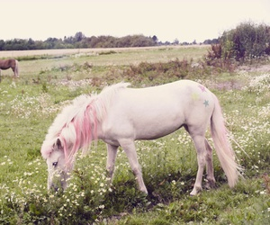 unicorn, pink, and horse image
