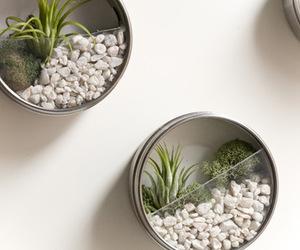 diy, plants, and decor image