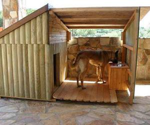 dog, house, and dog house image