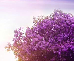 flowers, purple, and tree image