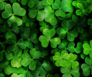wallpaper, clover, and green image
