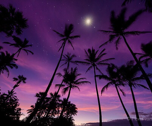 purple, sky, and palm trees image