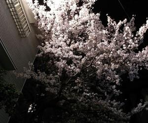aesthetic, dark, and flowers image