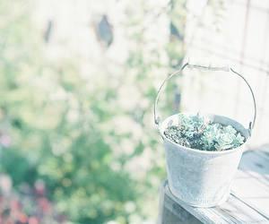 beautiful, garden, and green image
