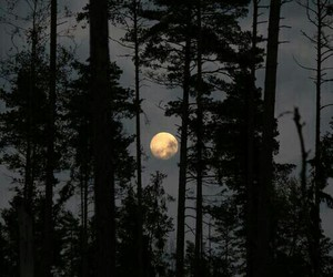 beautiful, forrest, and moon image