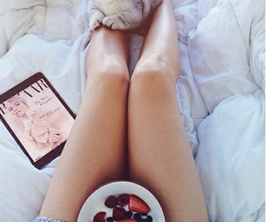 bed, cat, and strawberries image