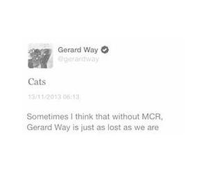 cats, funny, and gerard way image
