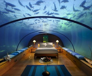 bedroom, fish, and room image