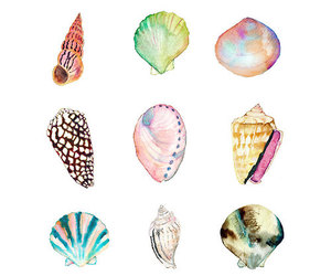 shell, art, and summer image