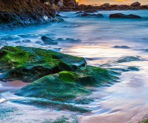 beaches, greenery, and beauty image
