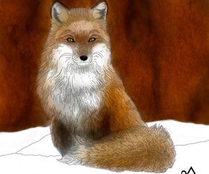 art, fox, and sitting image