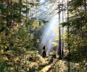 artsy, girl, and forest image