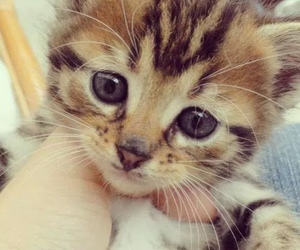 cat, cute, and kitty image