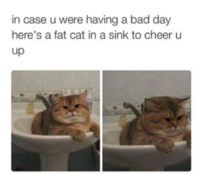 funny, bad day, and cat image