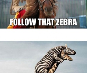 funny, lion, and zebra image