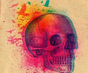skull, colors, and bird image