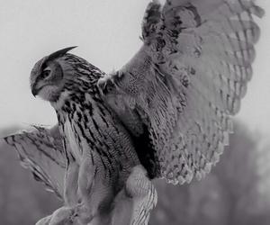 bird, beautiful, and black and white image