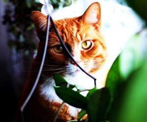 cat, ginger, and nature image