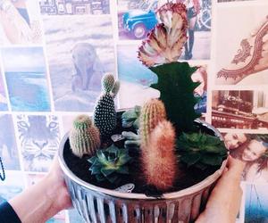 aloe, beautiful, and cacti image