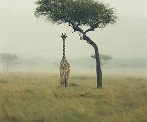 giraffe, tree, and animal image