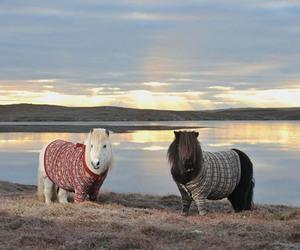 horse, landscape, and sunset image