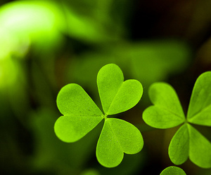 green, clover, and photography image