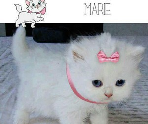 cat and marie image