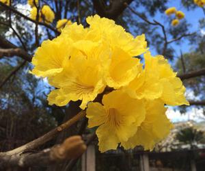 amazing, flower, and tree image