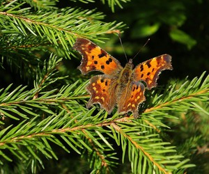 animal, germany, and butterfly image