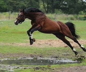 horse, jump, and photography image