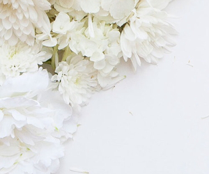 background, flowers, and image image