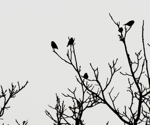 birds, black, and black and white image