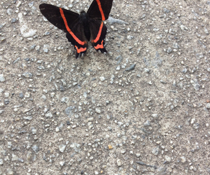 beauty, black, and butterfly image