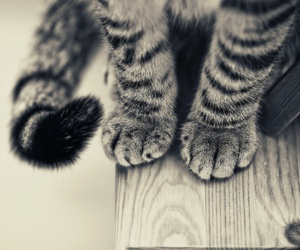 cat, paws, and animal image