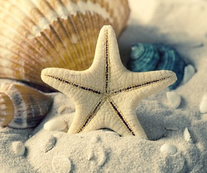 shell, sea, and starfish image