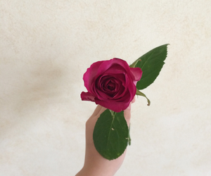 photography, pink, and rose image