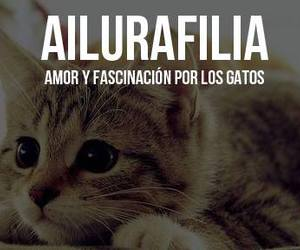 Gatos, ailurafilia, and cat image