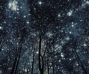 stars, night, and tree image