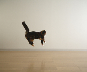 cat, jump, and funny image
