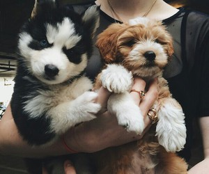 black, dogs, and cute image