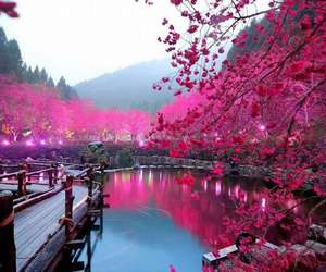 cherry, japan, and pink image